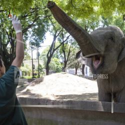 Mara the elephant is cared for at the Buenos Aires Ecoparque