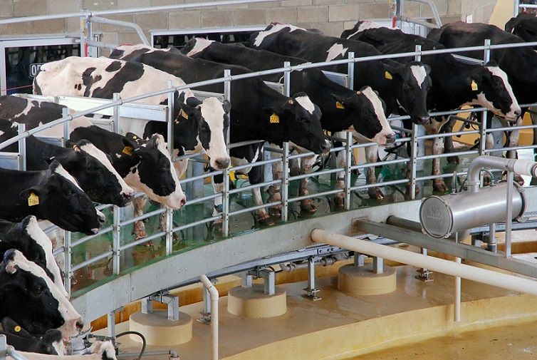 En 2020 se produjeron 11.100 millones de litros de leche.
