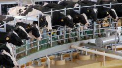 El 2019 no fue un año bueno para la lechería, tanto para la argentina como para el resto de los países productores.