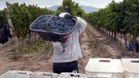 SAN JUAN. Aseguran que por un sobrestock de varietales de dudoso origen, en 2 años cayó 7 veces el precio de los vinos de este tipo.