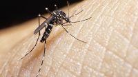 Dengue: 4 claves para entender y prevenir la enfermedad del mosquito