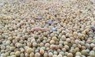 Arribó el primer lote de soja de la campaña: será rematado en abril en Rosario.