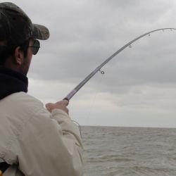 Lo que puede ser mejor es acotar los lugares para cada pesca.