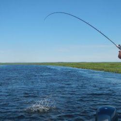Ninguna modalidad santifica la pesca ni le da categorías éticas especiales.