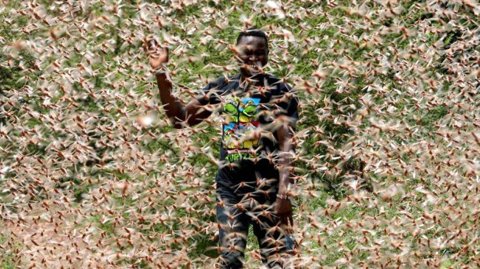 Una foto de Kenia grafica la bíblica plaga de langostas que azota la región.