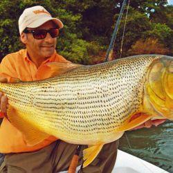 Los dorados más grandes comieron muy pegados a la costa.