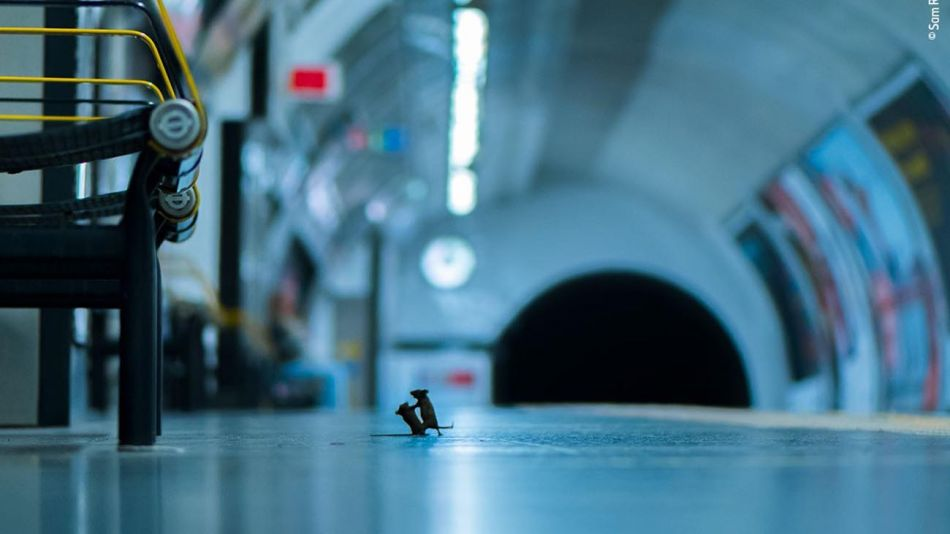 Pelea en la estación. Fotografía captada por Sam Rowley.