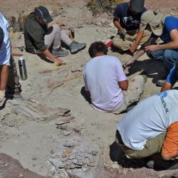 Handout pictures released by the Argentine Museum of Natural Sciences showing the discovery of a new species of dinosaur found in El Cuy, Río Negro Province, on May 15, 2019. With four metres of length, the new dinosaur was named Tralkasaurus cuyi, said the Scientific Divulgation Agency of the National University of La Matanza.