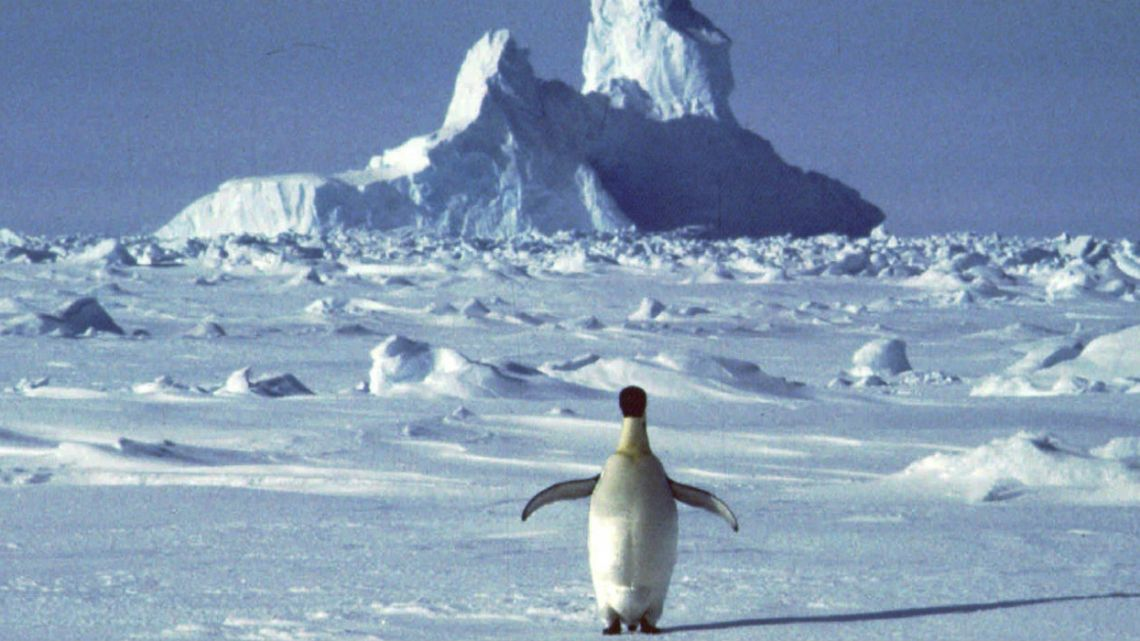 A lonely penguin appears in Antarctica during the southern hemisphere's summer season.