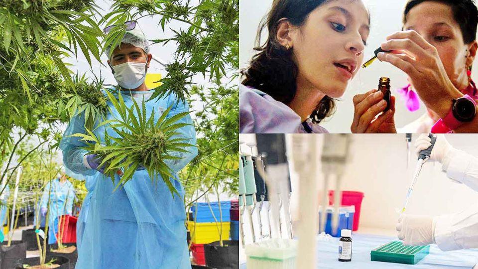 20200215_conicet_cannabis_medicinal_afpna_g.jpg