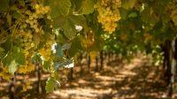 olivos y viñedos La Rioja 17022020