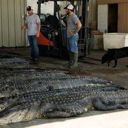 """""""Si no los cazáramos habría demasiados cocodrilos y empezarían a ingresar a nuestros territorios, comerse a nuestros animales e hijos""""."""