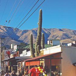 Caracoleando por la montaña se llega a Tafí del Valle, donde los cardones superan dos veces la altura de las casas, bajo unos cielos azulísimos.