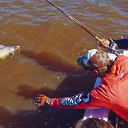 Un excelente patí obtenido con anguila a punto de ser levantado.