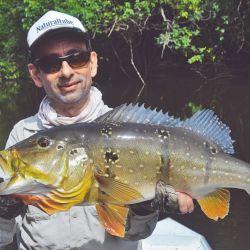 Buena cantidad de tucunarés pescados en zonas de aguas quietas.