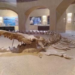 En el museo egipcio de Wadi El Hitan se exhiben fósiles del mar prehistórico, por ejemplo el mayor esqueleto intacto de un basilosaurus isis descubierto hasta ahora. Foto: Simone A. Mayer/dpa.