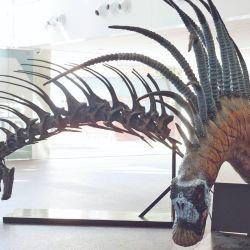 Bajadasaurus pronuspinax. El término alude a la formación geológica en la que fue hallado, Bajada Colorada (Neuquén).