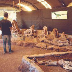 En el Valle de los Dinosaurios (Neuquén) se encontró al Giganotosaurus carolini, considerado el dinosaurio carnívoro más grande de todos los tiempos, aún superior al Tyrannosaurus rex.