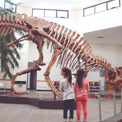 En la Argentina se ha encontrado el 10 % de las especies de dinosaurios totales halladas hasta ahora en todo el mundo. Unas 80 de 800.