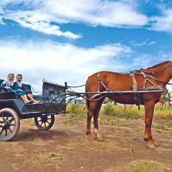 El sulky es el único vehículo propio de los menonitas: usan autos pero de personas fuera de la aldea. Tienen hijos en cantidad, casi todos rubios.