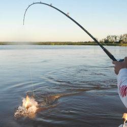 El trolling requiere conocimiento del guía y buena técnica por parte del pescador.