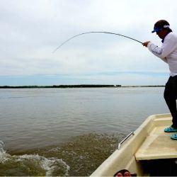 Implantaron la veda de pesca en los ríos Paraná y Uruguay