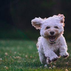 Los perros van cambiando de personalidad a medida que envejecen.