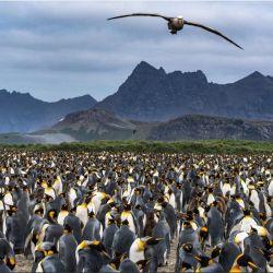 Una de las muchas fotos que tomó McBride, inmerso en la naturaleza de las islas Georgias del Sur.