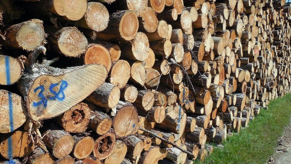 Madera industria Forestal