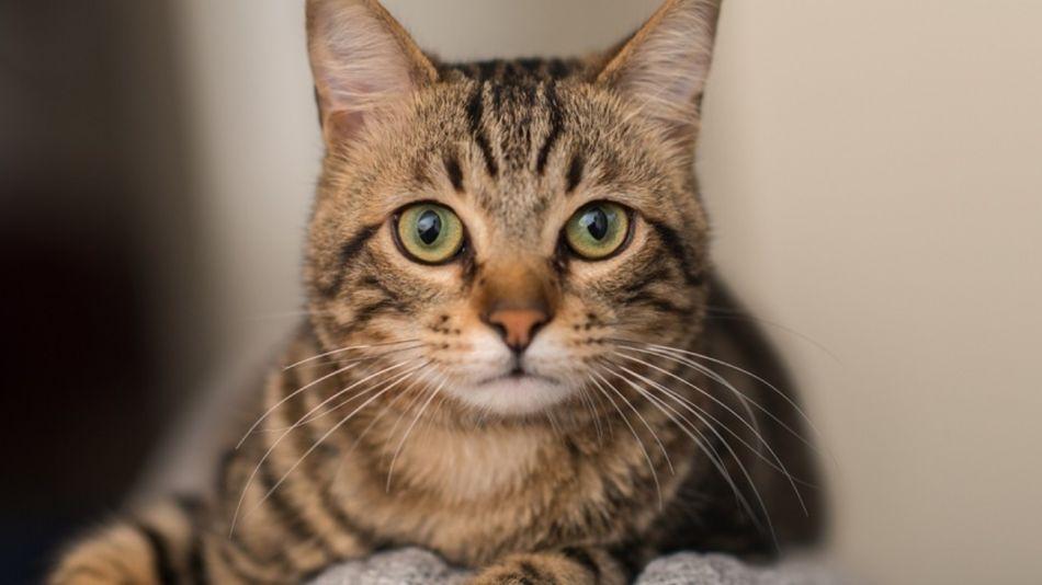 gato coronavirus 01042020
