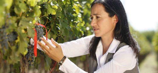 La marca de vinos más admirada del mundo es argentina