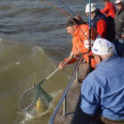 Esta pesca tiene una particularidad: se ingresa al agua cuando la marea comienza a crecer y hay que salir antes de que empiece a bajar.