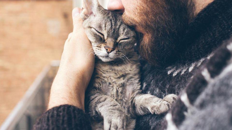 """Imagen ilustrativa. Según un estudio, los gatos son """"altamente susceptibles"""" al coronavirus."""