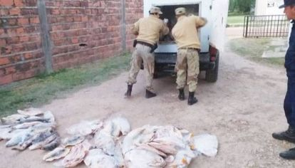 La policía de Entre Ríos decomisó centenares de kilos de pescado en tránsito ilegal.