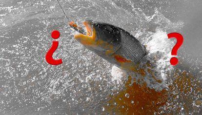 Entre Ríos estudia prohibir la pesca debido a la bajante.