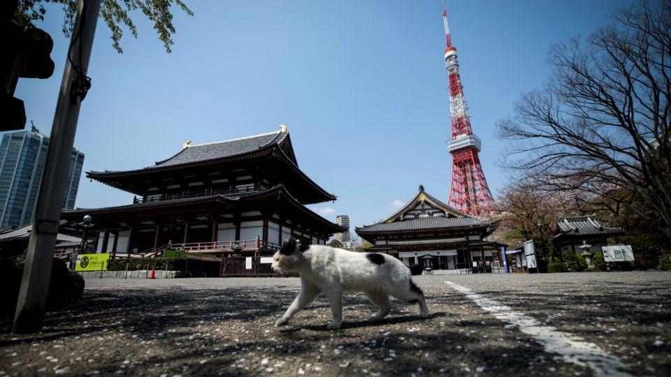 Los animales ganan las calles en plena pandemia