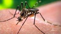 Dengue: la epidemia silenciada
