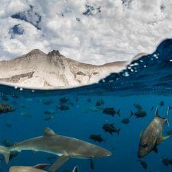 El Parque Nacional Revillagigedo protege el 5 % de los mares mexicanos y se convirtió en la reserva marina más grande de América del Norte. Es una reserva sin pesca industrial de 147.000 km2.