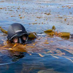 Fanático del mar desde chico, Aburto formó parte del equipo de Pristin Seas (una división de National Geographic) que grabó el documental Revillagigedo, el México más salvaje.