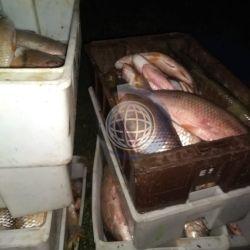 El departamento de Islas del Ibicuy fue el escenario de un importante operativo donde se decomisaron 6.500 kilos de pescado.