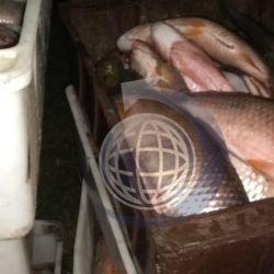 Dichos pescadores, junto con la persona responsable del camión, fueron detenidos por pescar de manera furtiva.