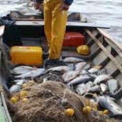 La pesca de subsistencia, en muchos casos, es una pesca comercial encubierta.