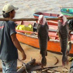 La bajante del río Paraná es aprovechada por muchos pescadores artesanales, quienes venden surubíes y dorados a los frigoríficos.
