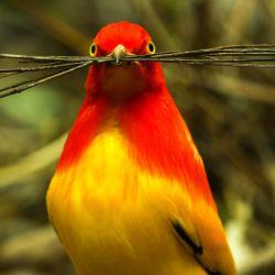 Bailando con los pájaros es otro documental original de Netflix.