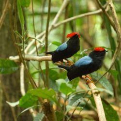 Es una visita muy particular a las majestuosas aves del paraíso para descubrir sus rituales de apareamiento.