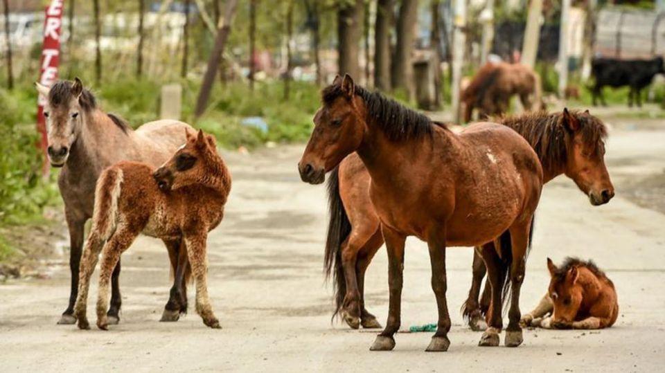 Animales en las calles por Coronavirus 20200429