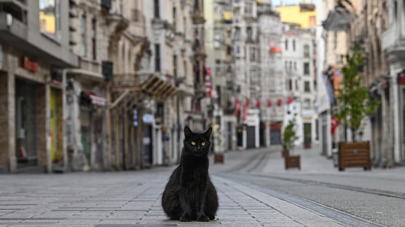 Los animales ganaron las calles con las cuarentenas en distintas partes del mundo.