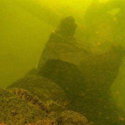 Restos del barco hundido el siglo pasado que apareció en Ita Ibaté, por la bajante del Paraná.