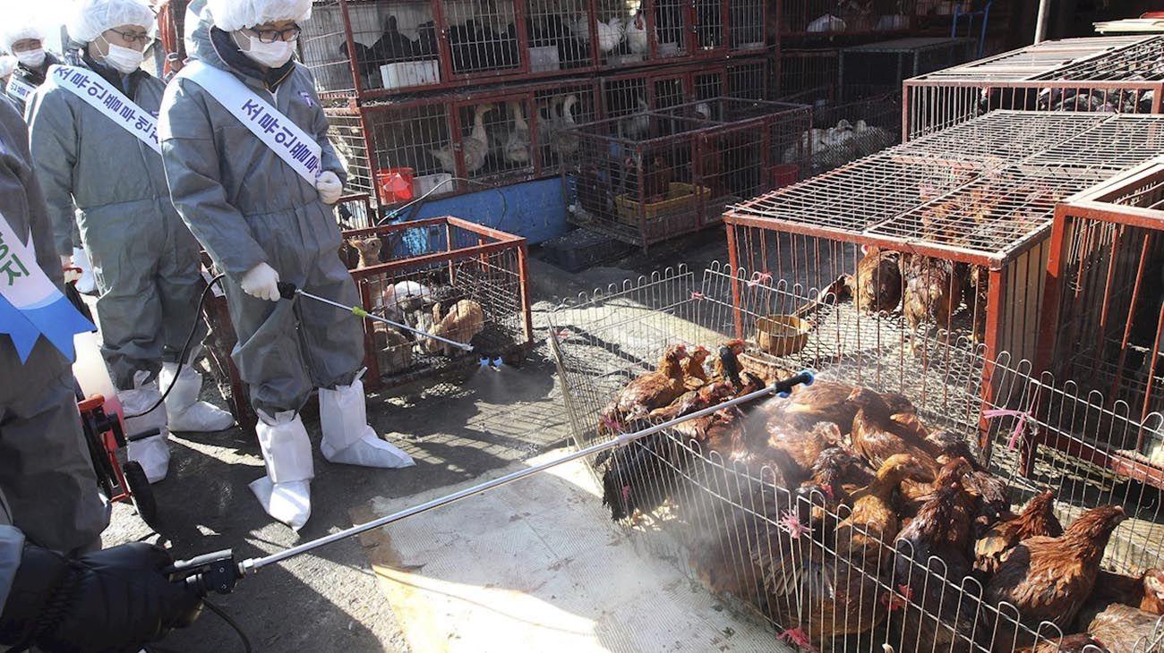 ZOONOSIS. El maltrato a los animales puede estar en el principio de la crisis sanitaria.