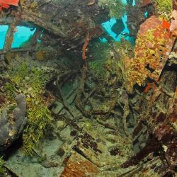 Algas y plantas que crecen en la artillería vacía.